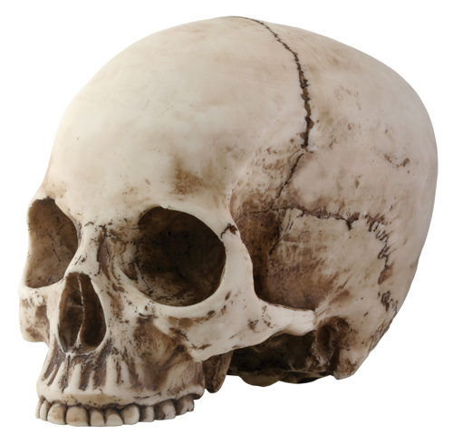 Skull Head with No Jaw