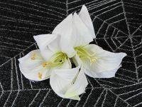 Hairy Scary Double White Lily Double Flower Hair Clip
